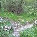 Achtung: hier muß man den Normalweg des Pustertaler Steiges (er führt nach rechts) an einem kleinen Steinmann (linker Bildrand) aufwärts entlang wenig markanter Steigspuren verlassen. Die Stelle ist in natura weniger auffällig, als es hier den Anschein hat.