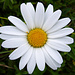 Zum Abschluß noch ein paar Beispiele der hochsommerlichen Blütenpracht.<br />Sie gefallen uns einfach, obwohl wir die meisten nicht kennen (ich zumindest).