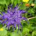 Eine Teufelskralle - eine der wenigen Blumen, deren Namen ich kenne.