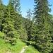 Auf lieblichem Steig geht es talauswärts - hoch über dem Grund der tief eingeschnittenen Archtalklamm.