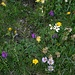 Blumenmeer am Rautispitz