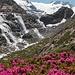 Wirklich sehenswerte Wasserfälle. Und der Almrausch blüht bereits in voller Pracht.