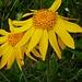 Tanz der gelben Blumen