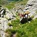 Tapfere SAC-ler am Aufstieg auf die Bocchetta di Catögn