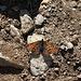<b>Graziosa farfalla...</b>