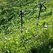 Eines der Schwierigsten Hindernisse, nasses/langes Gras + 30-40° und dann noch ein 1,4m hoher Zaun...