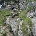 Seilgesicherter Abstieg unterhalb Geisskappel