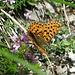 Die Schmetterlinge waren heute besonders aktiv - man musste fast schon aufpassen keinen zu verschlucken