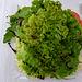 Das Grün der Natur machte Lust auf einen knackigen Salat