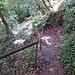 Rutschiger Abstieg in die Babbacombe-Bucht.