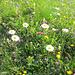 Blumenwiesen erfreuen das Auge