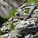 Die Trümmer von Corte di Cima auf ca. 2100 Metern. Das ehemals oberste Alpgebäude