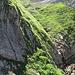 """Steiler, nordseitiger Abstieg vom Säntiswanderweg zu den """"Fildergloggeren"""""""