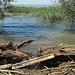 Ufer Natur