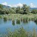 Naturschutzgebiet Schleienloch mit Blick zum Pfänder