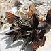 zahllose Schmetterlinge fliegen an diesem Tag