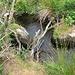 Der Bach Becka Brooke versteckt sich fast in der Vegetation und Topographie. Hier gab's ein Schuhvoll Schlamm ;-)