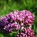 Mit offenen Augen finden sich direkt am Wegesrand tolle Blüten.