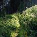 Am Anfang noch viel durch den Wald, angenehm kühl an diesem schon heissen Morgen.