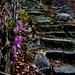 Feudale Treppenanlage nach Faidal mit Frühlingsgruss am Wegrand