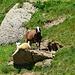 Vorgelagerter Wachposten!  (rund um den Gipfel tummelt sich eine grosse Schafherde)