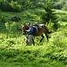 das Packpferd der Buvette d'Alpage des Petits Lacs wird zur wartenden Gruppe hinabgeführt