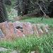 In alcuni tratti il sentiero che sale dall'Alpe di Prato Rotondo ad Urbell è magnificamente gradinato.