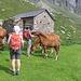 I cavalli dell'Alpe Quarnei sono molto confidenti.