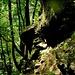 <br />Im Bauch der Schlucht<br />_________<br />_<br /><br />(Gaia - Faun)<br />[http://www.youtube.com/watch?v=h42gjj23diY]<br />___<br />_<br />___<br />______<br />-