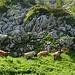 auch diese Herde Kühe mit Jungtieren hat sich ins urtümliche Gelände zurückgezogen