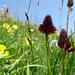 eine Farben-, Blumenpracht ohnegleichen treffen wir heute an