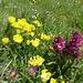 Blumenreichtum auch auf dem Tour de Mayen