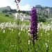 Sinnbild des heutigen Tourentages: im Fels mit unzähligen Blumen unterwegs