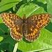 Hallo Schmetterling!