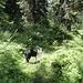 Traumhaft ruhiger Waldspaziergang zur Weissen Wand