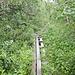 Unterwegs zwischen der Kebnekaise fjällstation und Nikkaluokta - Im teils strömenden Regen geht's nun über etwa 19 km Wegstrecke zurück. Die Passage von einigen momentan ziemlich zugewachsenen Abschnitten macht natürlich bei diesen Bedingungen besonders viel Spaß ;-).