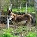 """<br />mong: """"Wow...!!! Du bist aber ein schöner Esel...!!!""""<br /><br />Der Esel: """"Danke. Du auch.""""<br /><br /><br /><br />___________<br />_______<br /><br />➨➧➡➦➥➤➡➠➔☞☛☞➔➜➽➼➺➻➸➝➛⟿⇝⟿<br />__________________________________<br />___________________________<br />__________________<br />_____________<br />_________<br />______<br />_____<br />____<br />___<br />__<br />_<br />"""