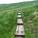 Mein Weg führt aufwärts duch Moorgelände. Wo die vielen Bahnschwellen wohl herkommen?