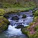 Das Flüsschen Le Tabeillon führt wegen der Schneeschmelze in den Freibergen aussergewöhnlich viel Wasser.