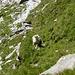 ...und Schafe