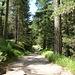schön angelegter Wanderweg durch den Wald