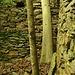 """<br />➽➼➻➸➻➵...und sah die Bäume von der Seite.<br /><br /><br />""""So, und jetzt schaust du nach oben..!!"""", sagten die Bäume.<br />______________________<br /><br />➽➼➺➻➸➭➮➯⇰➧➧➧➨➡➢⤻⤼⤻⤼⤻☛☛☞☞☛☞☛➔➙➛<br />_______________<br />_____"""