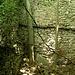 """<br />Im Raum sah ich zwei Bäume.<br /><br /><br />""""Komm ein wenig näher, mong"""", sagten die Bäume.<br />______________________<br /><br />(Come to Me - Björk)<br />[http://www.youtube.com/watch?v=XS6dDMBvlTk]<br />___________________________________<br /><br />➽➽➽➼➼➺➺➻➸➸➦➥➦➥⤻⤼⤻⤼⤻⤼⟿⟿➝➛<br />______________________<br />_____"""