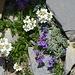 Auch wenn mein Weg noch lange ist, Zeit für ein paar Blumenfotos ist immer. :-)  weiss: Schwarzrandige Schafgarbe blau-violett: Alpen-Leinkraut