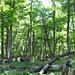 Noch ist alles grün; der Wald in der Gegend des Refugio Piedritas