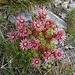 noch ein hübsches Blumen-Arrangement