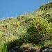 Am steilen Wiesengrat zum Gipfel: bunte Blumenidylle, charakteristisch für diese Tour.