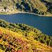 Alpenrosen und der Silsersee