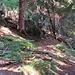Der gefährlichste Teil des Sentieros war hier im Abstieg durch den Wald nach Sta. Maria. Die Holzfäller kennen nichts! Hier fliegen einem die Tannen um die Ohren - echt! Kein Warnschild keine Wegsperrung aber Fällen tun die wie die Wilden.