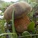 Und der erste Pilz